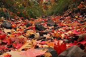 Autumn Colors in Utah_up Battle Creek