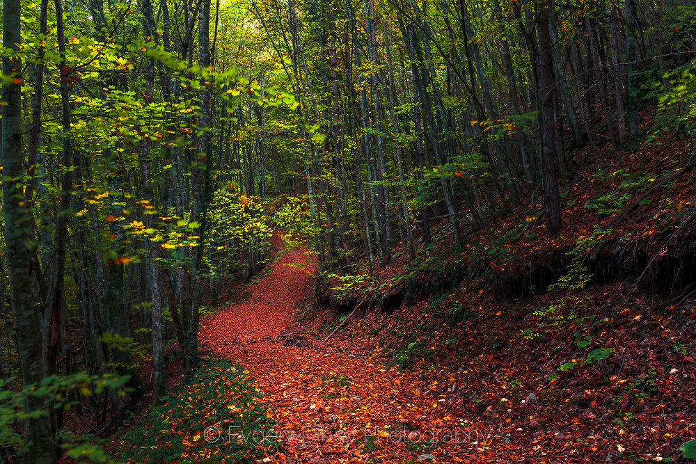 Footpath covered with autumn leaves in Strandzha Mountain