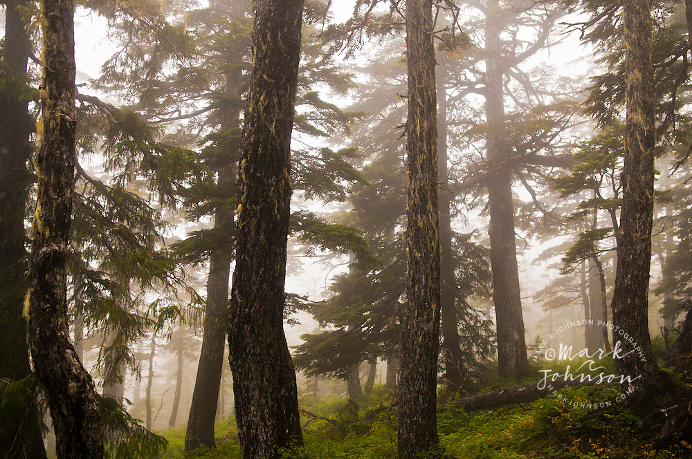 Foggy forest scene, Tongass National Forest, Alaska