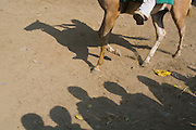 A crowd is looking at a horse race organised during the yearly Sonepur Mela, Asia's largest cattle market, in Bihar, India.