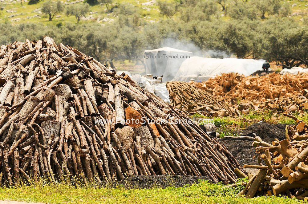 Israel, West Bank, Palestine, Samaria, Dotan Valley, Charcoal production site Pile of wood before covering with turf and clay before firing April 2009.
