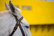 Head of a horse on Hydra, Greece.