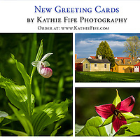 NEW! Greeting card designs<br />