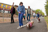 "Brianna Knauss and ""Millie"" followed by Don Shedd and ""Billy""  joined hundreds of dogs and their owners on the WOW Trail for the 1st annual BOW WOW Fest held Saturday morning.  (Karen Bobotas/for the Laconia Daily Sun)"