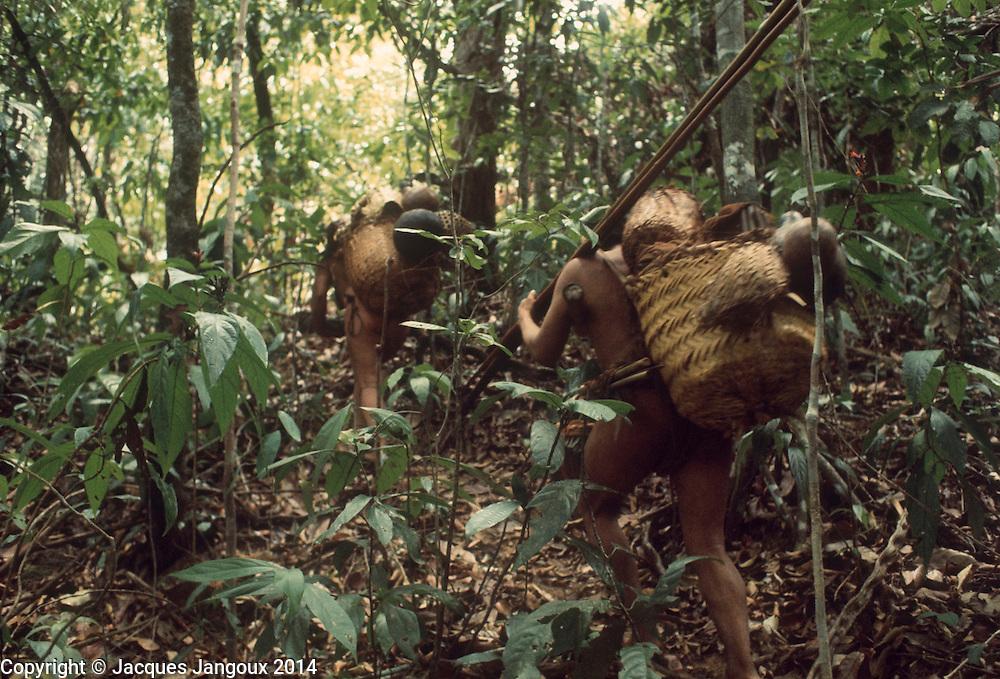 Semi-nomadic Hoti (Hodi) IndianS in Guiana Highlands of Venezuela: couple traveling in rainforest.