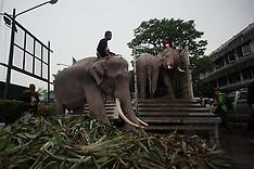 Bangkok - Royal Elephants Pay Respect At Grand Palace - 08 Nov 2016