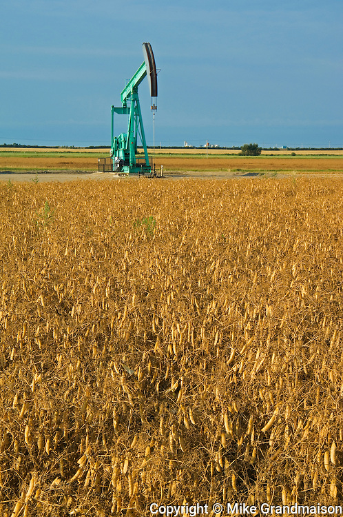 oil pump jack and  pea field<br /> Carlyle<br /> Saskatchewan<br /> Canada