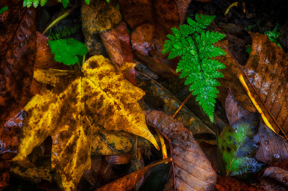Autumn floor covered with a fern damp leaves.