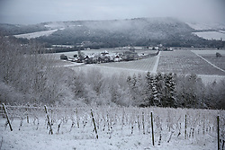 © Licensed to London News Pictures. 17/01/2016. Dorking, UK. Snow covers the area around Box Hill and Denbies Wine estate. Snow has fallen in the South East for the first time this winter. Photo credit: Peter Macdiarmid/LNP