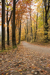 Small dirt road running through forest with colorful autumn foilage and leaves on ground