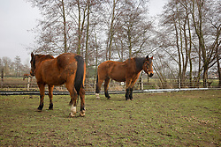 Old Horse Lodge - Laarne 2011<br /> © Dirk Caremans