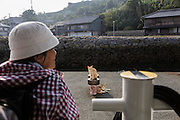 Aoshima, Ehime prefecture, September 4 2015 - Cats waiting for the departure of the boat to Iyo-Nagahama . The boat travels to Aoshima only twice a day and the line is loss-making. Local goverment would like to close the line, although there are still 15 residents on the island.<br /> Aoshima (Ao island) is one of the several « cat islands » in Japan. Due to the decreasing of its poluation, the island now host about 6 times more cats than residents.