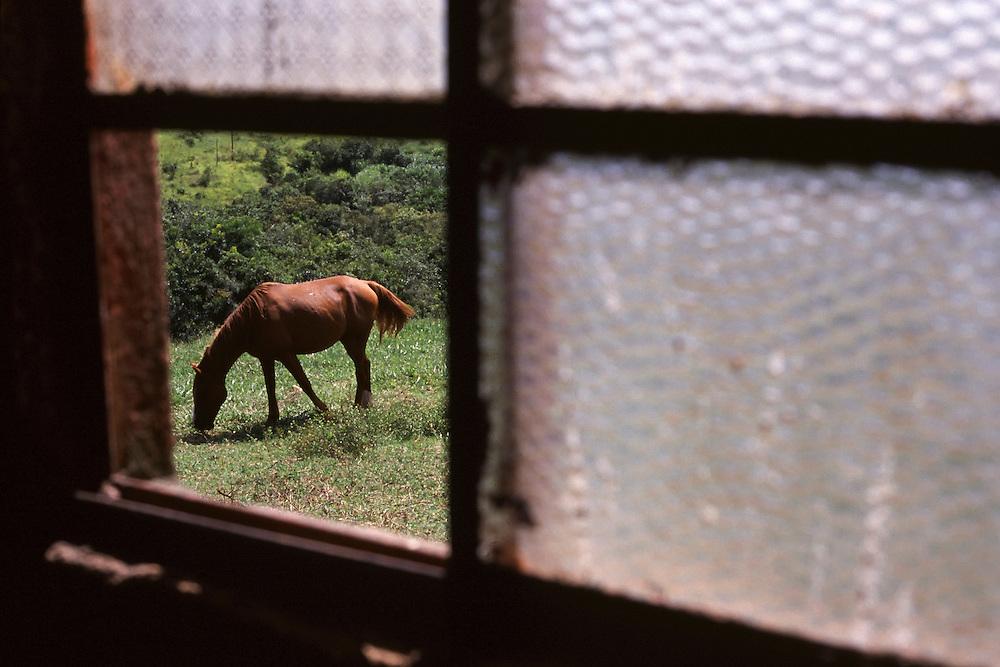 Carmo da Cachoeira_MG, Brasil...Cavalo pastando proximo a uma casa em Carmo da Cachoeira...A horse grazing next to a house in Carmo da Cachoeira...Foto: LEO DRUMOND / NITRO