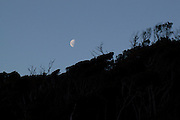 A half moon rises above silhouetted trees in Rakiura National Park, Stewart Island, New Zealand