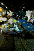 Tuna on a handcart at the auction at the Tokyo Metropolitan Central Wholesale Market or Tsukiji Fish Market is the largest fish market in the world.