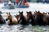 Chincoteague Pony Swim