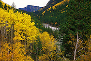 Aspens along Bull River in fall. Bull River Valley, southeast British Columbia