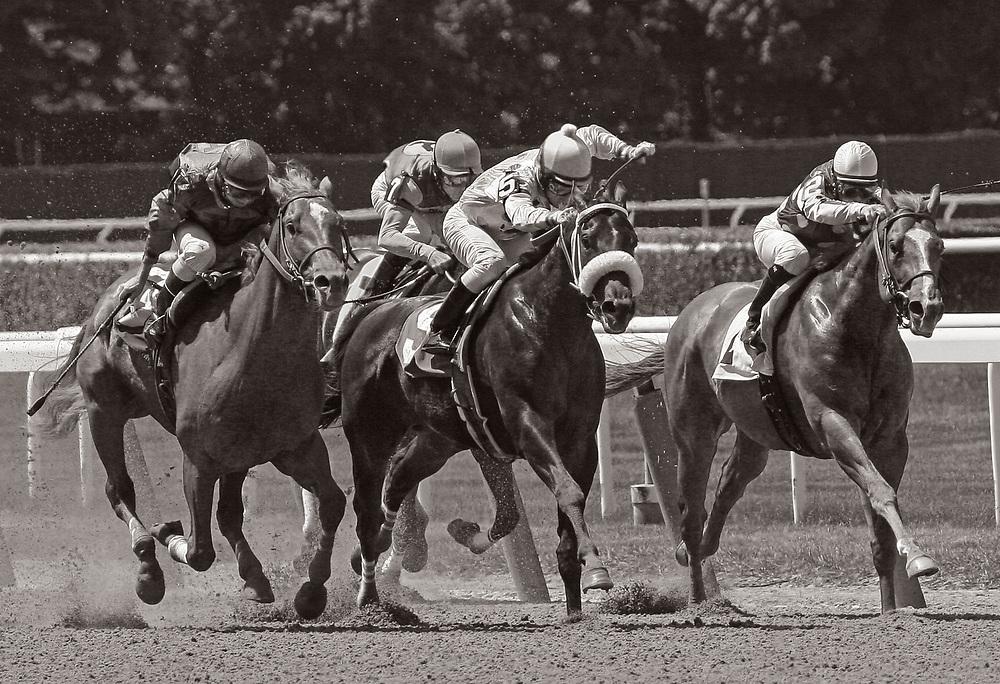 belmontpark,race,horse,thoroughbred