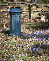 Backyard Garden with early blooming Purple Crocus flowers. Winter Backyard Nature in New Jersey. Image taken with a Leica TL-2 camera and 55-135 mm lens (ISO 100, 135 mm, f/4.5, 1/500 sec).