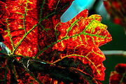 Orange, Red and brown autumn coloured leafs