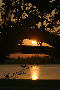 Sunrise through trees on the Inter-Coastal Waterway in West Palm Beach Florida