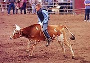 05 AUGUST 2000 - WILLIAMS, AZ: Jack Overson holds onto his bucking steer but loses his hat during the steer riding contest for cowboys under 12 at the 22nd Annual Cowpunchers' Reunion Rodeo in Williams, Arizona, Aug 5. The rodeo is held for working cowboys from the ranches in Arizona and the region. PHOTO BY JACK KURTZ