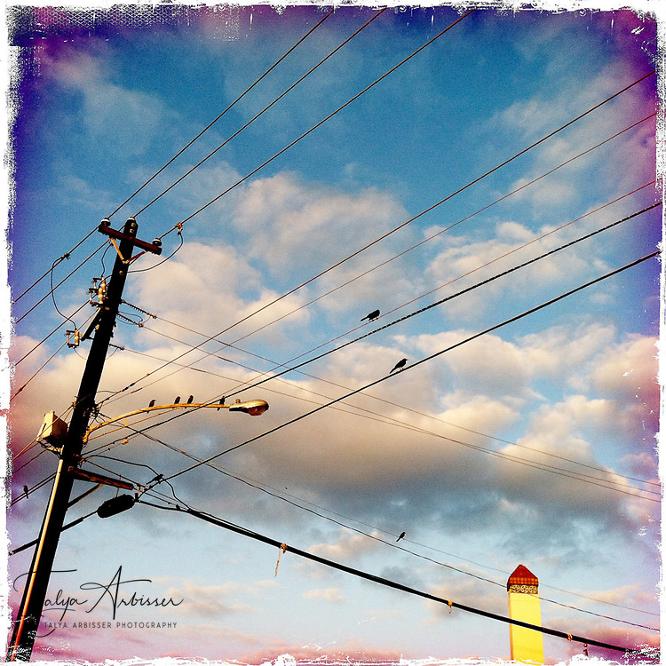Birds on a wire - Houston, Texas