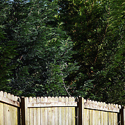 Green trees grow over a wooden fence.