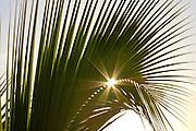 Sunburst through a palm frond in Hawaii
