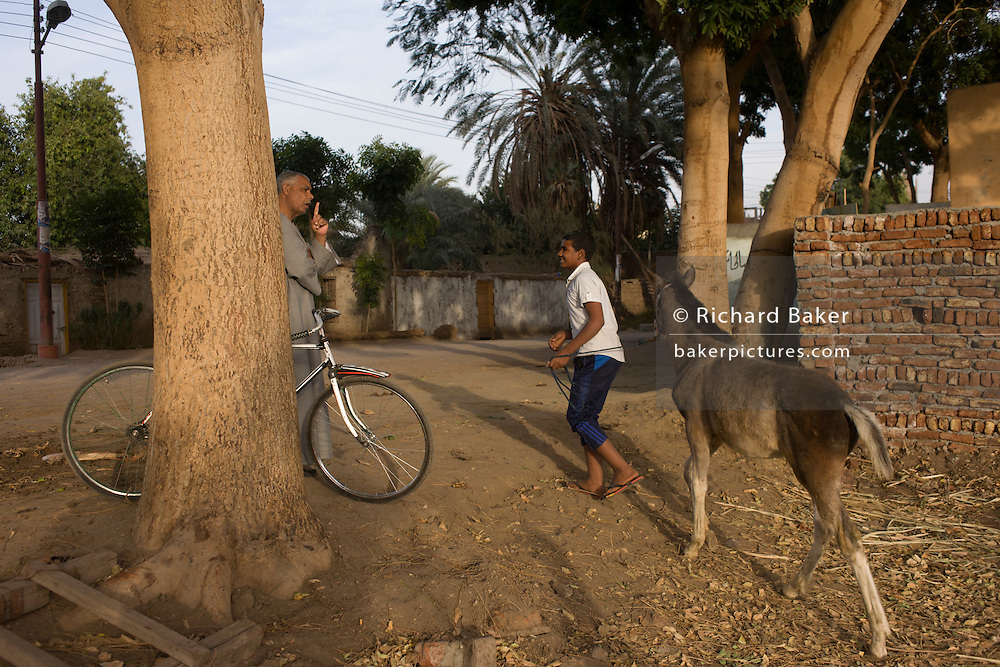 A local man mentors a young Egyptian boy in the training of his foal in the village of Bairat on the West Bank of Luxor, Nile Valley, Egypt.