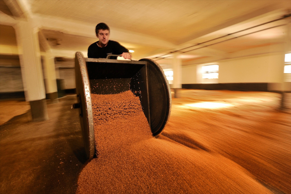 Turning out  the malted barley for drying at Laphroaig Distillery, Isle of Islay, Scotland