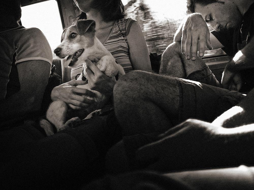 Europe, Italy, Milan, Milano, Street Photography, Dog