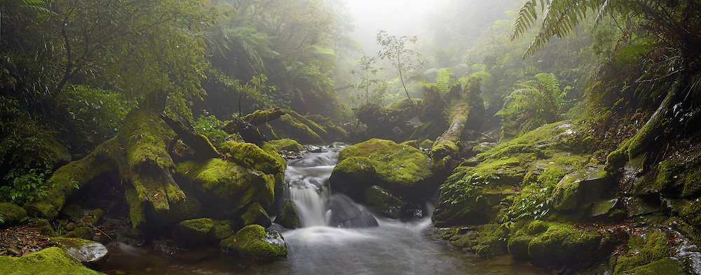 Part of the Gondwana Rainforests of Australia World Heritage Area, Five Day Creek spills through the lush green cascades of New England National Park, New South Wales, Australia.