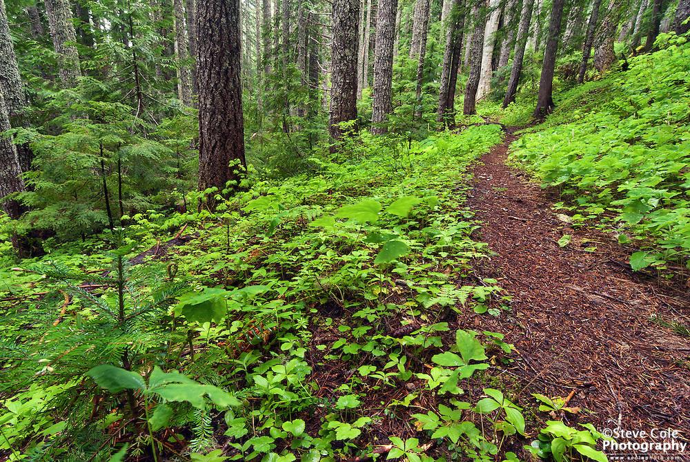 Verdant Greens - Eastside Trail, Mount Rainier National Park