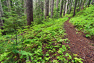 Verdant Greens - Eastside Trail, Mount Rainier National Park