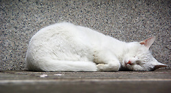 A cat sleeps in Nanjing, capital of east China s Jiangsu Province, March 17, 2013. March 21 marks the World Sleep Day, which is an annual event intended to be a celebration of sleep and a call to action on important issues related to sleep, China, March 17, 2013. Photo by Imago / i-Images...UK ONLY.