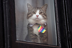 © Licensed to London News Pictures. 13/02/2018. London, UK. A cat called 'James', wearing a multi-coloured tie, belonging to WikiLeaks founder Julian Assange, is seen sitting in the window at the Embassy of Ecuador in London before a court ruling on his arrest warrant. The Australian and Ecuadoran national skipped bail to enter the embassy in 2012 in order to avoid extradition to Sweden over allegations of sexual assault and rape, which he denies. Photo credit: Ben Cawthra/LNP