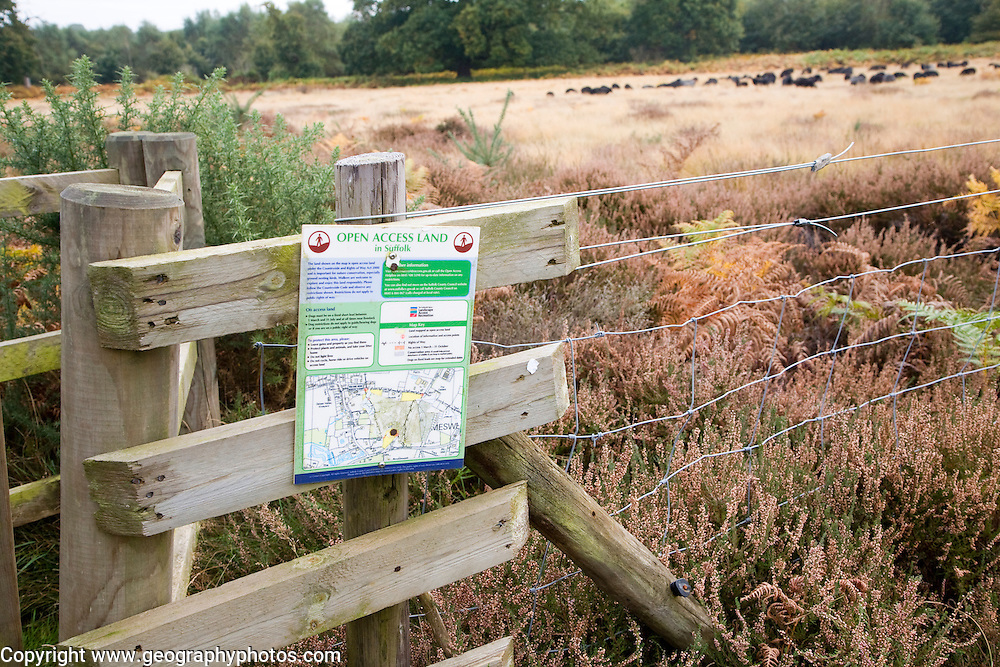 Sign for Open Access land managed conservation grazing by Hebridean sheep, Sutton Heath, Suffolk, England