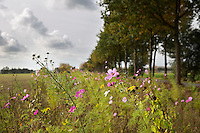 Wageningen Akkerrandenproject.<br /> Akkers en akkerranden ingezaaid met bloemen, kruiden en zaden. Ze bieden bescherming en geven voedsel aan vogels, wild, bijen, vlinders en andere insecten.
