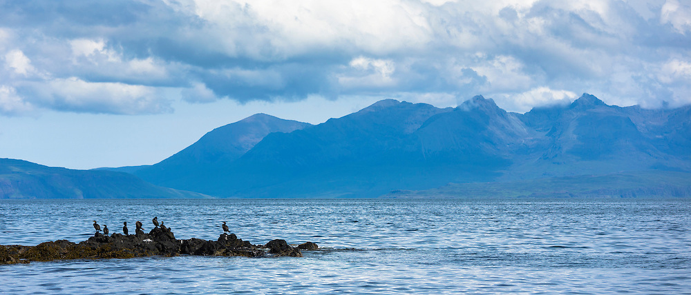 Colony of Shag coastal birds, Phalacrocorax aristotelis, on rocks on Isle of Canna part of the Inner Hebrides and Western Isles in West Coast of Scotland