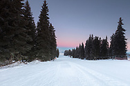 Ski run in a pine forest at early at morning
