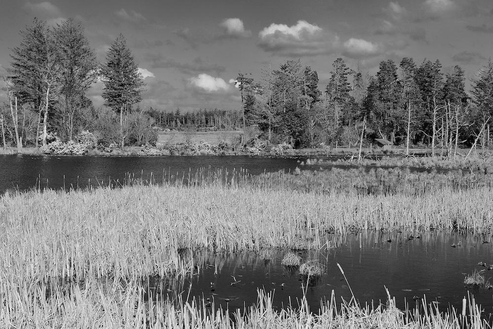 Bandon Marsh Wildlife Refuge - Oregon Coast - Infrared Black & White