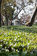 Palampur. India: A nearby tea estate, groomed as a garden, becomes a park that one can stroll through (Photo: Ann Summa).
