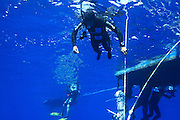 Alon Rivkind set a new Israeli record freediving with Variable Weight of 120 meters depth . He held his breath for 3:04 <br /> Wednesday  30.07.2013 at 09:45 red sea Eilat/israel<br /> <br /> About Alon<br /> Alon was exposed to the sport of free diving after completing basic diving course (about 16 years).   <br /> Today Alon Rivkind is manager of Free Diving school in Eilat and  AIDA certified instructor of the world's largest association of free diving courses.<br /> <br /> All rights reserved to Gilad Kavalerchik