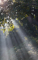 Sunlight on riverine forest in Bardia National Park, Nepal