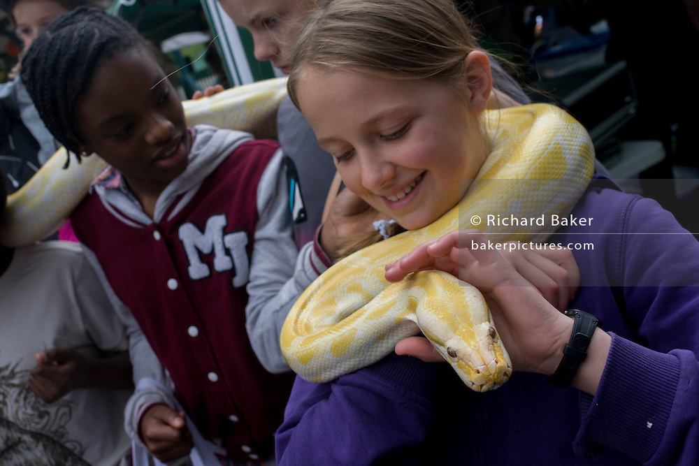 Local children enjoy handling a Burmese Python in their local park during a community festival.