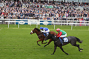 AMNAA (15) ridden by Connor Beasley and trained by Adrian Nicholls winning The SKF Rous Selling Stakes over 6f (£20,000)  during the Midsummer Raceday held at York Racecourse, York, United Kingdom on 14 June 2019.