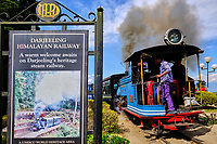 Inde, Bengale Occidental, Darjeeling, le célebre toy train du Darjeeling Himalayan Railway au Batasia Loop, Patrimoine Mondial de l'Unesco // India, West Bengal, Darjeeling, the toy train from Darjeeling Himalayan Railway at Batasia Loop, Unesco world Heritage
