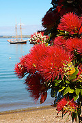 pohutukawa tree and R. Tucker Thompon at Russell, Bay of Islands