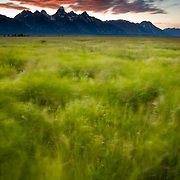 late evening winds blow the grasses and clouds in Grand Teton National Park, Wyoming